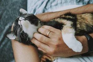 Scent As De-Stressor Pet Lovers